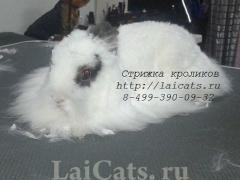 wshowstrizhkakrolikov1